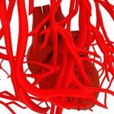 Menselijke hart en aders royalty-vrije illustratie