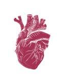 Menselijke hart vectorillustratie Royalty-vrije Stock Afbeeldingen
