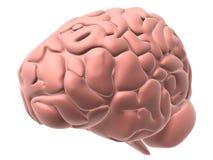 Menselijke hersenen Stock Afbeelding