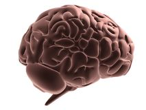 Menselijke hersenen Stock Foto's