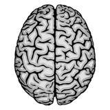Menselijke hersenen. stock illustratie