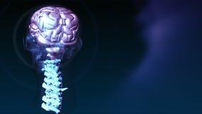 Menselijke Hersenen 4 vector illustratie