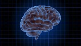 Menselijke hersenen die op een blauw net roteren - Hersenen 1003 HD vector illustratie
