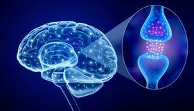Menselijke hersenen en Actieve receptor Stock Afbeeldingen