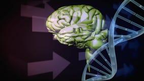 Menselijke hersenen en DNA-schroef stock videobeelden