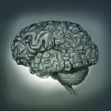 Menselijke Hersenen - het Digitale Schilderen Stock Foto