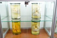 Menselijke hersenen op lichte achtergrond een deel van lichaam in formaline Medisch kliniekconcept Wetenschapsmuseum royalty-vrije stock foto's
