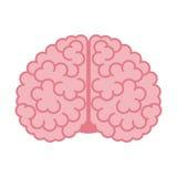 Menselijke hersenen op wit Royalty-vrije Stock Foto