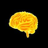 Menselijke hersenen zijmening vector illustratie