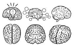 Menselijke hersenenreeks Stock Afbeeldingen
