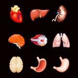 Menselijke Interne Organen, op zwarte Stock Foto's