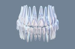 Menselijke kaak met de model medische die illustratie van de tandenanatomie op witte achtergrond wordt geïsoleerd 3D Illustratie stock afbeeldingen