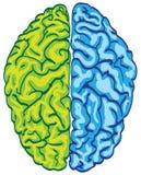 Menselijke kleurenhersenen royalty-vrije illustratie