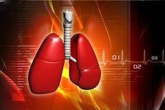 Menselijke longen Royalty-vrije Stock Foto's