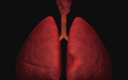 Menselijke longen Stock Afbeelding