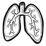 Menselijke longenschets royalty-vrije illustratie
