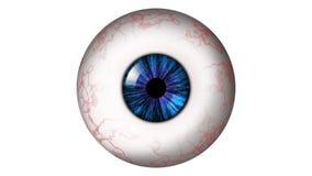 Menselijke oogappel met blauwe iris Stock Afbeelding