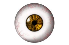 Menselijke oogappel met geel lis royalty-vrije illustratie