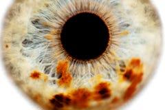 Menselijke oogclose-up Stock Foto's
