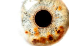 Menselijke oogclose-up Royalty-vrije Stock Fotografie