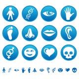 Menselijke pictogrammen Stock Fotografie
