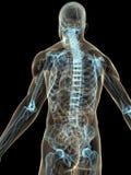 Menselijke rug Stock Fotografie