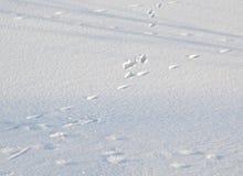Menselijke schaduw op de sneeuw Royalty-vrije Stock Afbeeldingen