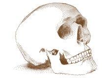 Menselijke schedel,   royalty-vrije illustratie