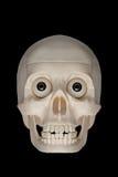 Menselijke schedel Stock Fotografie