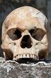 Menselijke schedel Royalty-vrije Stock Afbeeldingen