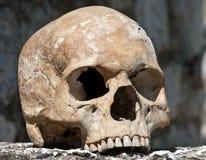 Menselijke schedel Royalty-vrije Stock Foto's
