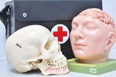 Menselijke schedel Stock Foto's