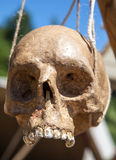 Menselijke schedel Stock Afbeelding