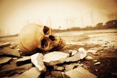 Menselijke schedel Royalty-vrije Stock Fotografie