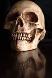 Menselijke schedel Royalty-vrije Stock Afbeelding