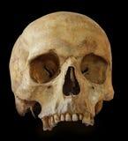 Menselijke schedel die op zwarte achtergrond wordt geïsoleerdl Stock Foto