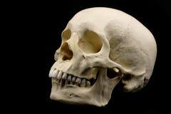 Menselijke schedel die op zwarte wordt geïsoleerdd Stock Foto's