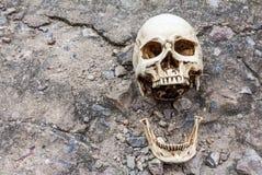 Menselijke schedel, gescheiden kaak, op de straat van het barstcement Stock Afbeelding
