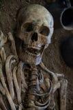 Menselijke schedel met donkere achtergrond Concept dood, verschrikking en anatomie Griezelig Halloween-symbool Royalty-vrije Stock Afbeelding