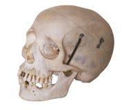 Menselijke schedel met het knippen van weg Royalty-vrije Stock Foto