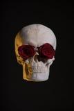 Menselijke schedel met rode rozen in oogkassen Royalty-vrije Stock Foto's