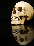 Menselijke schedel met spiegelbeeld op zwarte Stock Afbeelding