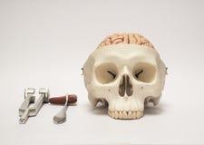 Menselijke schedel model en medische equpments Stock Foto's