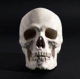 Menselijke schedel op een zwarte achtergrond Stock Afbeelding