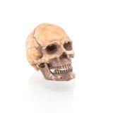 Menselijke schedel op geïsoleerd royalty-vrije stock afbeelding
