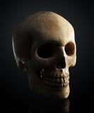 Menselijke schedel op zwarte achtergrond Stock Foto's