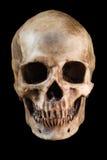 Menselijke schedel op zwarte achtergrond royalty-vrije stock foto's
