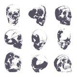 Menselijke schedel in ruwe schets Hand-drawn vector van de mensen de hoofdanatomie Royalty-vrije Stock Foto