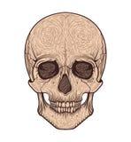 Menselijke schedel stammenstijl Tatoegering blackwork Vector hand getrokken illustratie Royalty-vrije Stock Fotografie