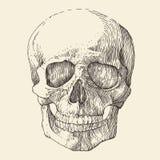 menselijke schedel, uitstekende gegraveerde illustratie, Stock Foto